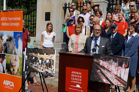 Big News for Massachusetts Farm Animals! 2016 Ballot Measure Will Help Curb Abuse