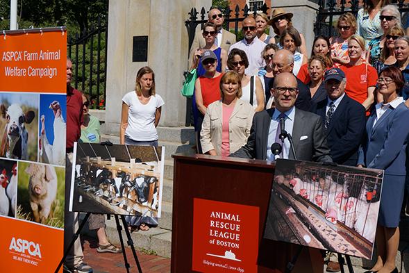 Big News for Massachusetts Farm Animals! 2016 Ballot Measure Will Help Curb Abuse
