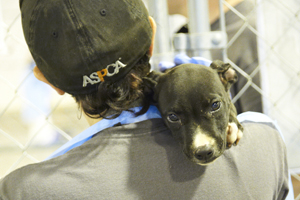 Puppy rescued from dog fighting raid