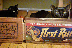 two black cats playing in boxes