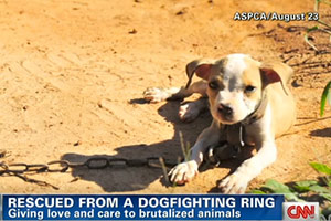 Inside Look: CNN's Anderson Cooper 360 Visits Temp Shelter for Dog Fighting Victims