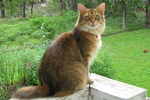 Cat sitting outside