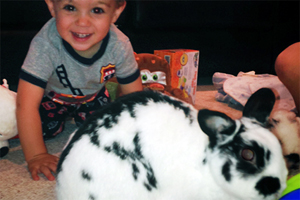 Little boy playing with black and white spotted rabbit