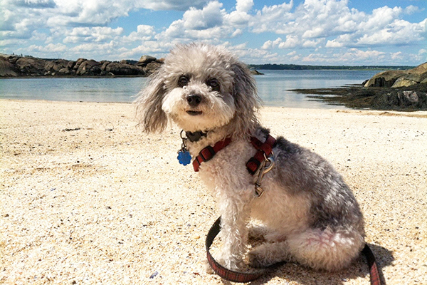 Small curly dog sitting on the beach