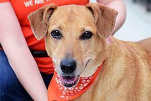Go Orange for Animals & Save Big at the ASPCA Store!
