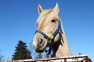 happy white horse