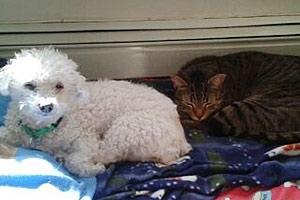 ASPCA Happy Tail: Curly Sue's New Crew