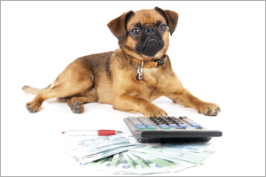 Dog next to calculator and documents