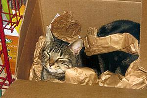 Cute cat playing in cardboard box