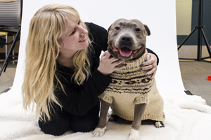 ASPCA staff kneeling next to grey pit bull wearing sweater