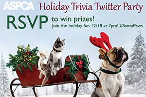 Holiday Trivia Twitter Party and Giveaway