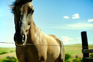 Dark brown horse outside