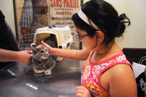 Little girl pets cat