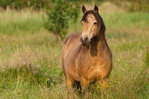 Tan horse standing in tall grass