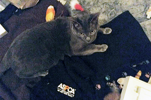 ASPCA volunteer Tamara B.'s beloved cat, Gypsy