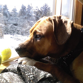 Keep Your Pets Safe and Happy During a Blizzard