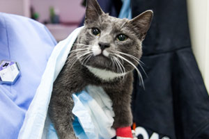 King recovering at the ASPCA Animal Hospital