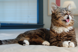Lil BUB and the ASPCA Team Up for Special Cats