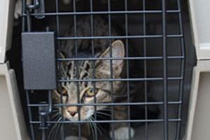 Small cat in a crate