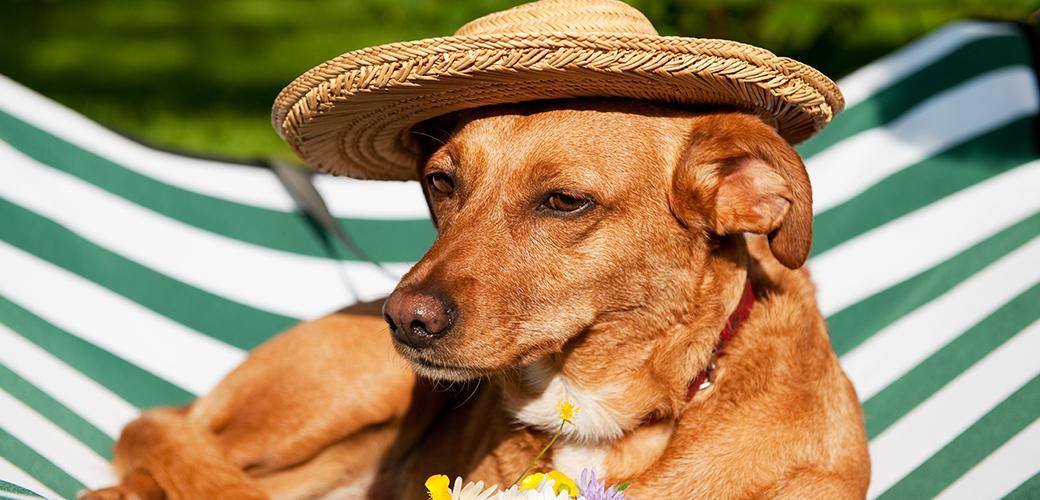 dog with straw hat