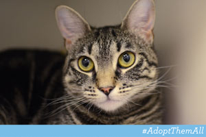 ASPCA Pet of the Week: Mona