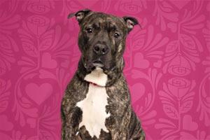 ASPCA Pet of the Week: Morris