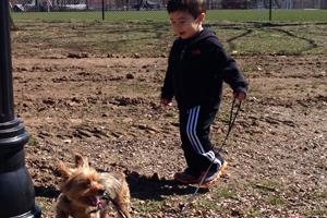 Little boy walking yorkie