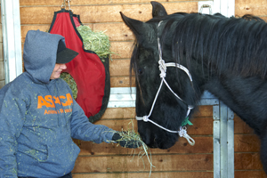 ASPCA FIR Responder giving hay to rescued horse