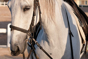 Not in Our Backyards: New Mexicans Reject Horse Slaughter