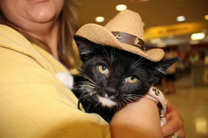 Black and white cat wearing cowboy hat