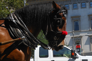 NYC Carriage Horse Flips in Busy Street!