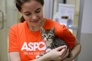 ASPCA staffer holds kitten