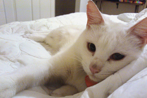 Cute white cat napping on a bed
