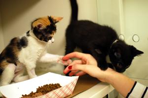 Kittens enjoying meal time