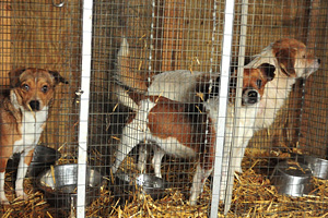 How to Fight a Puppy Mill