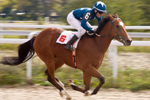 Protecting Horses from the Starting Gate to the Finish Line