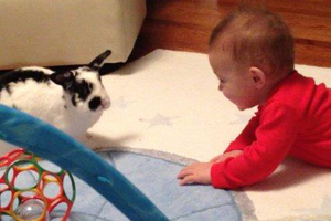 Black and white bunny playing with baby