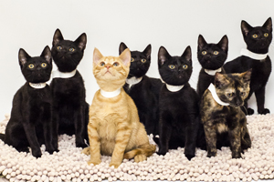 Eight kittens sitting on rug