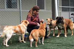 Rehabilitation Center Graduate Thrives as Part of ASPCA Staff Member's Family