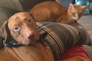 brown dog and orange cat hanging out on a couch