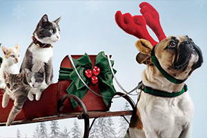 Dog and cat in holiday scene