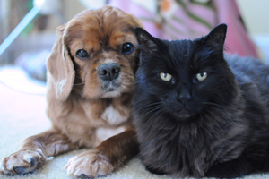 Brown dog and black cat sitting next to each other