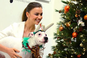 Supermodel Irina Shayk holding white pit bull by Christmas tree