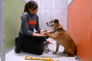 ASPCA staff working with dog at St. Hubert's
