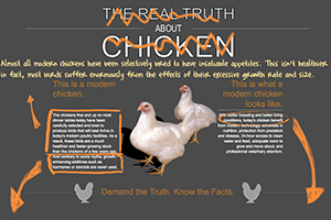 What the Cluck, Indeed? Chicken Groups Remake Our Website!