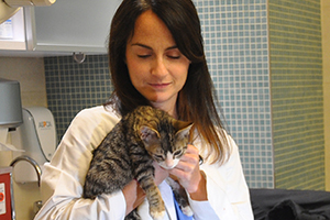 ASPCA Vet holds kitten