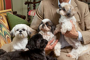 4 shih tzus being held
