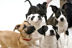 Top Three Tips for National Puppy Day
