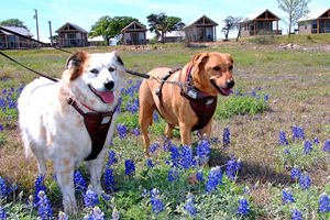 two dogs standing in field of flowers