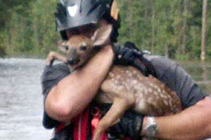 a fawn held by an ASPCA rescuer